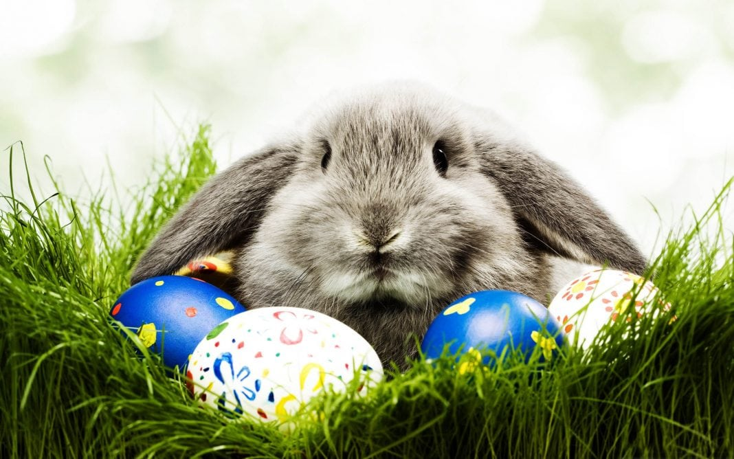Where does the Easter Bunny come from? | BUnow - Bloomsburg