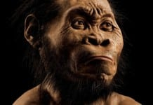 Homo Naledi restructured appearance